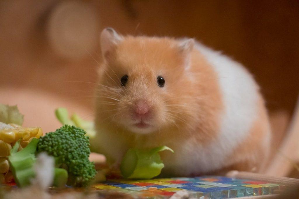 hamstering